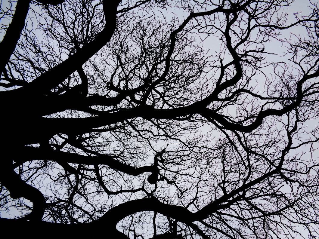 Chestnut tree, Sevenoaks, UK